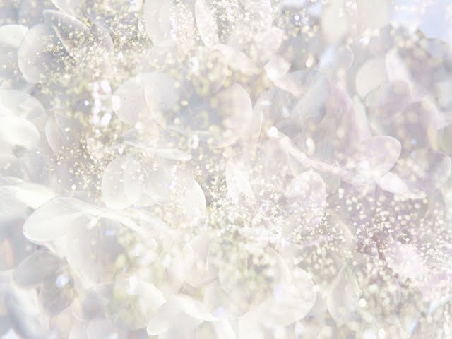 white-flower-in-dreamy-shining-background-wallpaper-102821 ...